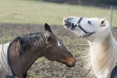 Horse emotion Stock Photo