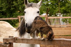 Horse loves kitty. Horse is peting little kitty Royalty Free Stock Photo