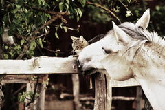 Horse loves kitty. Horse is peting little kitty Stock Photo