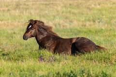 Horse lying in green grass on meadow stock photos