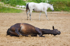 Horse lying in the sand Royalty Free Stock Photo