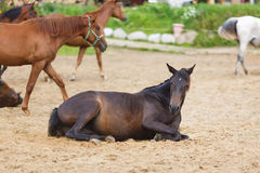 Horse lying in the sand Stock Photo