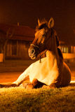 Horse lying in the street. Beautiful golden horse lying in the street at night Stock Photos