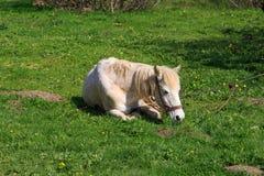 Horse Lying on Sward Royalty Free Stock Images