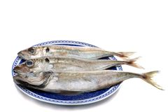 Horse mackerel Royalty Free Stock Photography