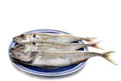 Horse mackerel Royalty Free Stock Photography