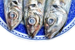 Horse mackerel Stock Photography