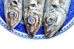 Horse mackerel Stock Photography