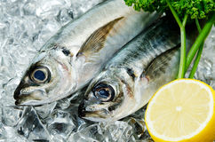 Horse mackerel Royalty Free Stock Photos