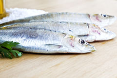 Horse mackerel. Crisp and blurred on wooden tray with salt and oil in the corner Royalty Free Stock Photography
