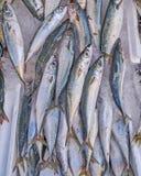 Horse mackerel fish at the local marke Royalty Free Stock Images