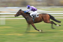 Horse Madam - horse racing in Prague Royalty Free Stock Images