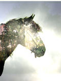 Horse in the magic forest Royalty Free Stock Image