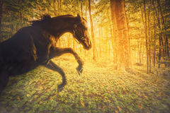 Horse in a Magical Fiery Forest Stock Images
