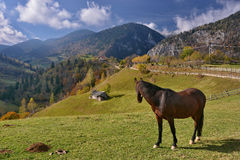Horse in Magura Village, Romania Stock Photo