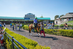 Horse and male jockey getting ready for the race at Emerald Downs Royalty Free Stock Image
