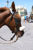 Horse in Malta Stock Photo