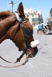 Horse in Malta. Profile of a brown horse on a street in La Valletta, Malta, in spring stock photo