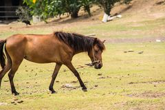 Horse is a mammal that involve many human activities. As sports, recreational work Stock Images
