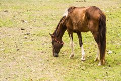 Horse is a mammal that involve many human activities. As sports, recreational work Royalty Free Stock Photos
