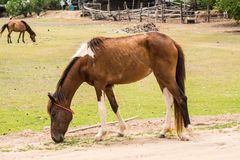 Horse is a mammal that involve many human activities. As sports, recreational work Royalty Free Stock Photo