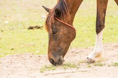 Horse is a mammal that involve many human activities. As sports, recreational work Stock Photo