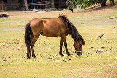 Horse is a mammal that involve many human activities. As sports, recreational work Stock Photography
