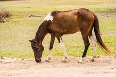 Horse is a mammal that involve many human activities. As sports, recreational work Stock Photos