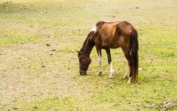 Horse is a mammal that involve many human activities. As sports, recreational work Stock Image