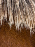 Horse Mane Abstract Royalty Free Stock Photo