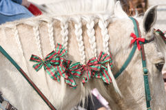 Horse mane braided. With bows and ribbons Stock Images