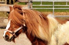 Horse, Mane, Bridle, Horse Like Mammal stock images