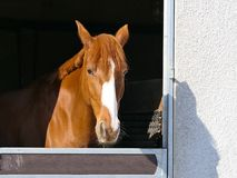 Horse, Mane, Bridle, Horse Like Mammal Stock Photos