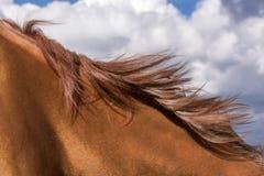 Horse mane Royalty Free Stock Image