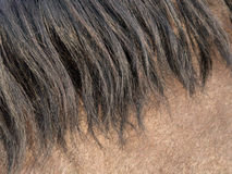 Horse Mane closeup Stock Photo