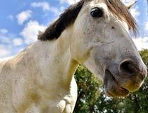 Horse, Mane, Fauna, Horse Like Mammal Stock Photography