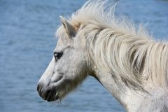 Horse, Mane, Fauna, Horse Like Mammal Stock Images