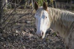 Horse, Mane, Fauna, Horse Like Mammal Stock Photo