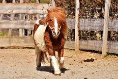 Horse, Mane, Horse Like Mammal, Bridle stock photos