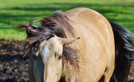 Horse, Mane, Horse Like Mammal, Fauna Stock Photo