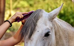 Horse, Mane, Horse Like Mammal, Horse Supplies Stock Photography