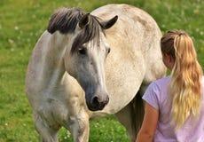 Horse, Mane, Horse Like Mammal, Mare Stock Image