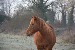 Horse, Mane, Horse Like Mammal, Mare royalty free stock images