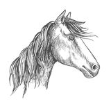 Horse with mane. Mustang stallion sketch portrait. White horse with wavy mane. Mustang stallion sketch portrait with peaked ears and kind trustful glance of eyes Royalty Free Stock Photos