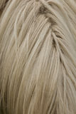 Horse Mane Royalty Free Stock Photo