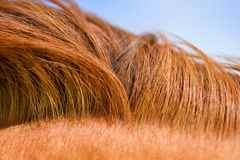 Horse mane texture Royalty Free Stock Photos