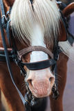 Horse with manes covering the eyes Stock Image