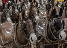 Horse Mannequins. Life sized model horses at the Fort Walla Walla museum harnessed to the old combine on display Royalty Free Stock Photography