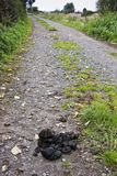 Horse manure. Horse droppings on farm track in somerset Stock Photos