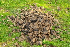 Horse manure Royalty Free Stock Photo